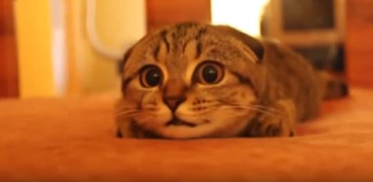 Kočičí útulek Skrýšov prosí o pomoc