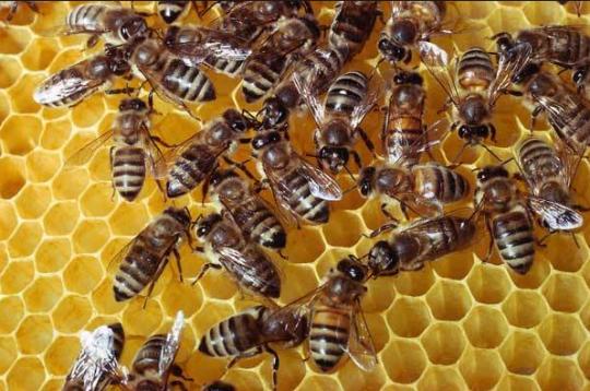 """Štúdia: Klesajúca populácia hmyzu nás vedie ku """"ekologickému Armageddonu"""""""