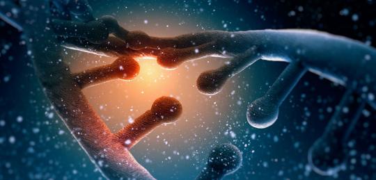 Jak daleko je věda ochotná zajít? Vědci vytváří lidsko-kuřecí hybridy, aby mohli pozorovat formování embrya
