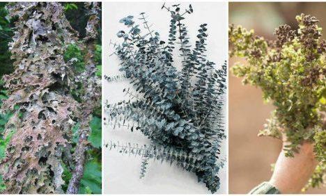 3 nejlepší bylinky na pročištění plic od prachu, plísní, bakterií a toxinů