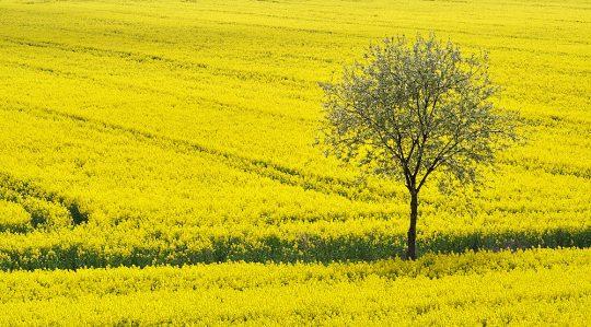 Příčiny sucha: Novodobí kolchozníci dělají z našich polí čerpací stanice biopaliv