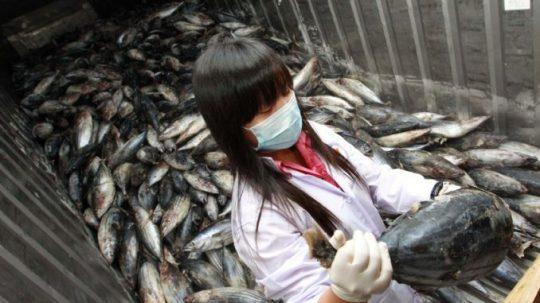 POZOR!!!!! Zločinci v EU povolili do Evropy dovážet silně kontaminované potraviny z okolí Fukushimy