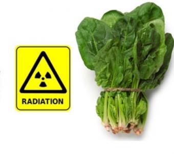 O čem zřejmě nevíte: radioaktivní ozařování neboli ionizace potravin v ČR