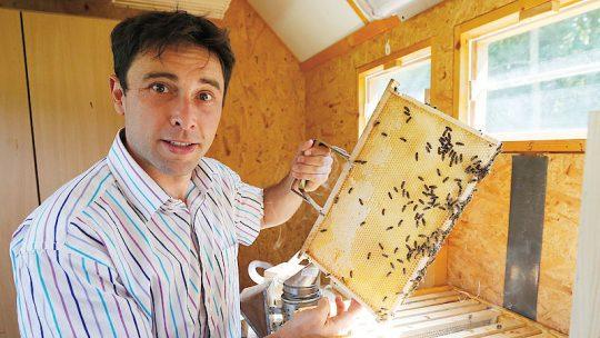 Bodla vás včela? Radujte se