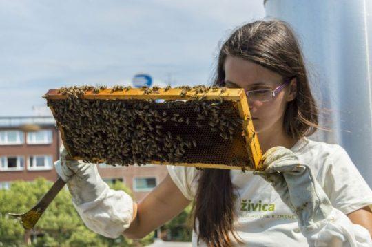 Prečo je med od mestských včiel taký chutný a aromatický