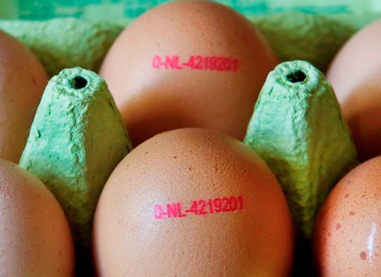 Nedozírné následky kontaminovaných vajec z Holandska a z jiných evropských zemí