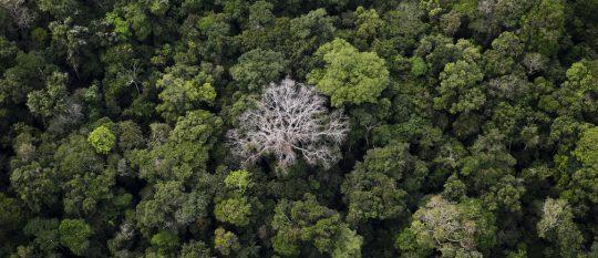Stromy v Amazonskom pralese si vyrábajú vlastný dážď