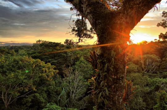 Rezervaci v Amazonii hrozí zánik