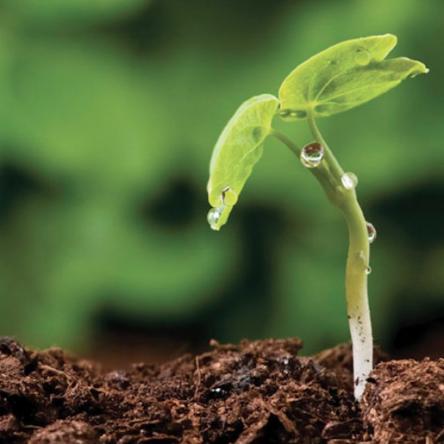 Vědci vytvořili umělou zeminu určenou k posílení vegetace
