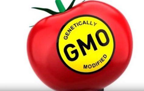 Nebezpečí geneticky modifikovaných plodin a organismů a něco více o nich