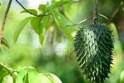 Farmaceutické firmy skrývaly před světem tuto plodinu, která pomáhá proti rakovině! Teď už to všichni vědí