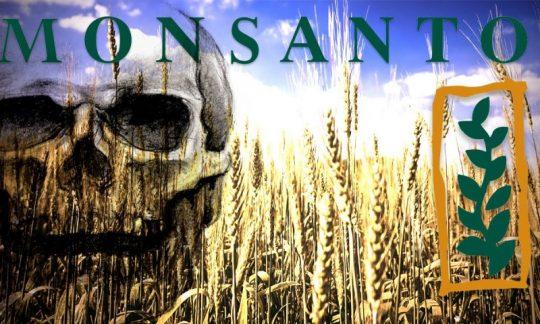 GMO SKANDÁL: Dlouhodobé účinky geneticky modifikovaných potravin na lidské tělo