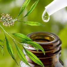 10 pádných důvodů, proč by měl mít každý doma tea tree olej