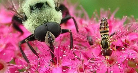 V Německu zmizely tři čtvrtiny všeho hmyzu. Nikdo však neví proč