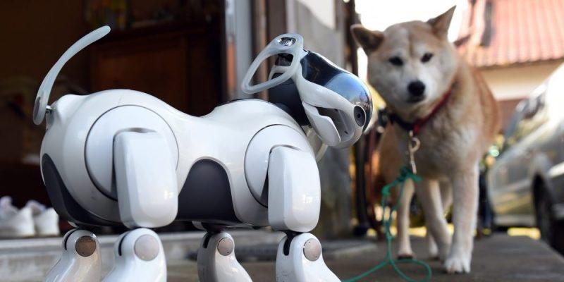 Čínský robopes nyní v prodeji. Kybernetický mazlíček je připraven vyrazit s vámi na procházku