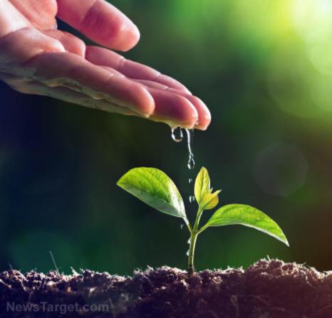 """Inženýři vyvinuli speciální """"tetování"""" pro rostliny, které snímá jejich potřebu vody"""