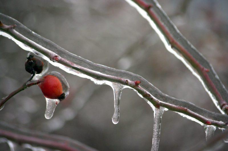 Svět se řítí do doby ledové? Podle modelu se Země začne v roce 2021 výrazně ochlazovat
