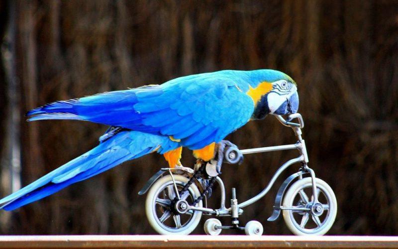 Ptáci jako znamení: Co znamená, když je potkáte?