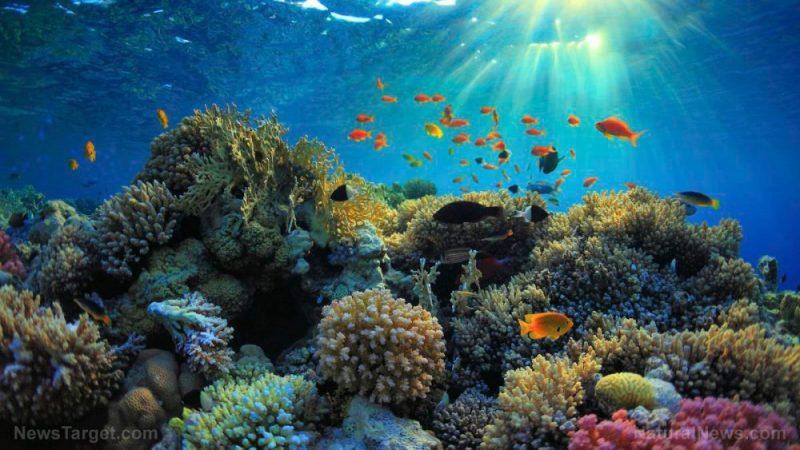 Další nebezpečí pro korálové útesy: plasty přenášejí mikroorganismy a šíří nemoci po mořském dně