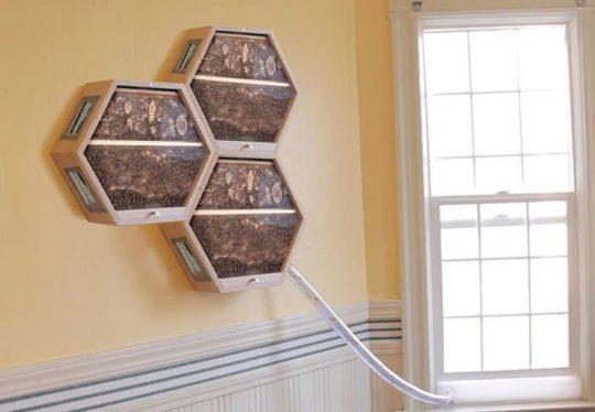 Včelí úl do obýváku? Šikovná a praktická konstrukce umožňuje snadnou instalaci
