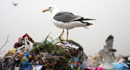 Ruští vědci vyvinuli novou technologii zpracování odpadu