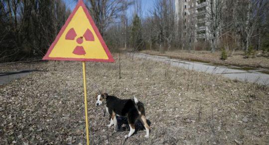 Dvě stovky štěňat z Černobylu budou vyslány do USA