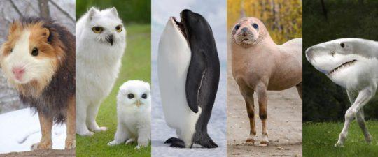 Jak by vypadal zvířecí svět, kdyby šla evoluce jiným směrem (FOTO)