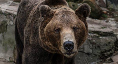 V den zahájení MS ve fotbale se ulicemi Moskvy proháněl medvěd hrající na vuvuzelu. Aktivisté jsou pohoršeni (VIDEO)