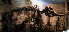 Francúzsky farmár niekoľko rokov skrýval mýtického mastodonta