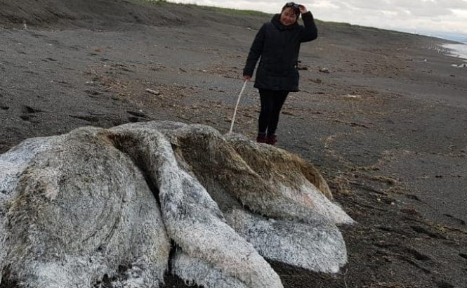 V Rusku na kamčatském pobřeží objevili pozůstatky podivného tvora