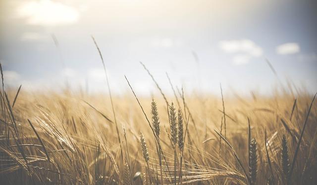 Stát částečně zakáže zemědělcům používání glyfosátu. Za porušení hrozí milionové pokuty