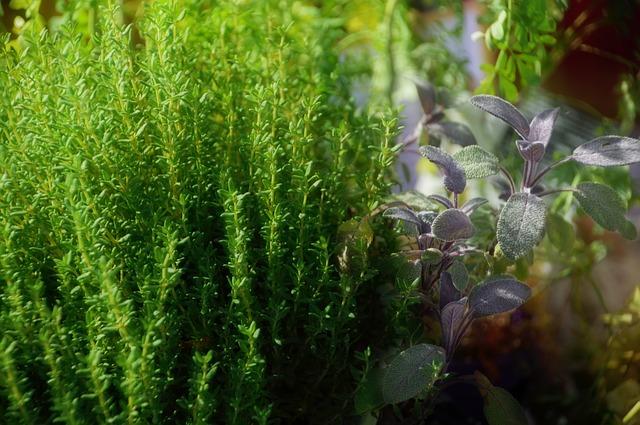 Nejmocnější bylinka proti stresu, herpesu, Candide a chřipkovému viru