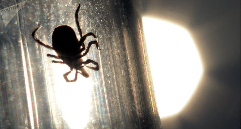 Čeští vědci varují před klíštětem, které přenáší alergii na maso. Může být i smrtelné