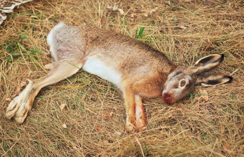 Co signalizují mrtví zajíci a ptáci na slovenských polích? Zřejmě po mrtvých včelách, zajících, bažantech a dravých ptácích budou následovat lidé