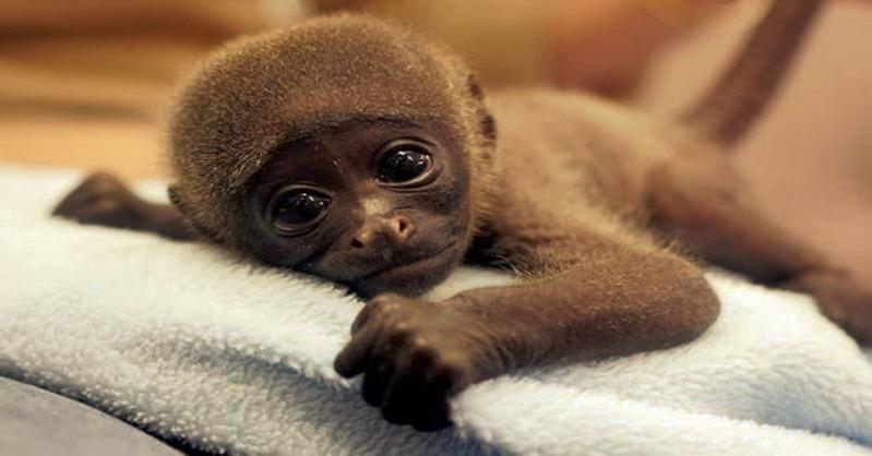 U mláďat opic se po vakcínách, které podávají i dětem, objevily symptomy autismu!!!!! No a máte to vědci potvrzeno