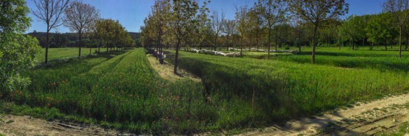 Naději pro vysychající půdu představuje agrolesnictví