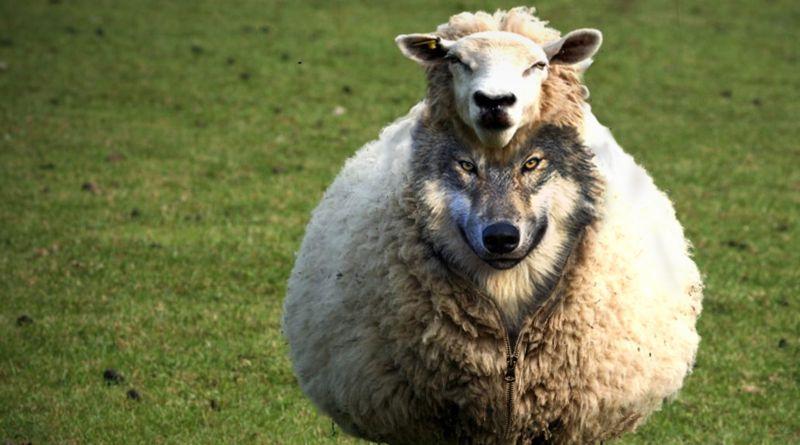 """Katar: """"Vlk v rouše beránčím"""""""