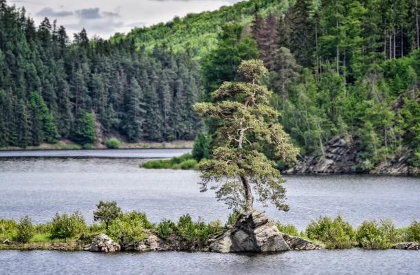 Vyberte v pořadí již 11. Evropský strom roku