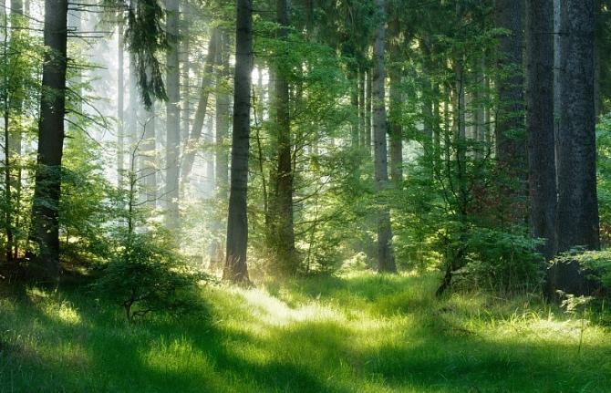 Pobyt v lese člověka mění, budete překvapeni jeho blahodárným účinkem