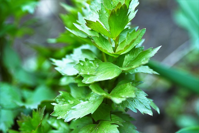 4 Úžasné adaptogenní byliny pro podporu nadledvinek a lepší zvládání stresu