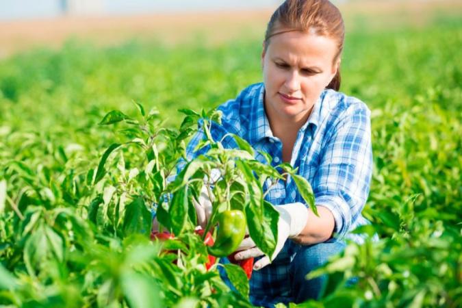 Najdi si svoji farmářku / svého farmáře a pěstitele